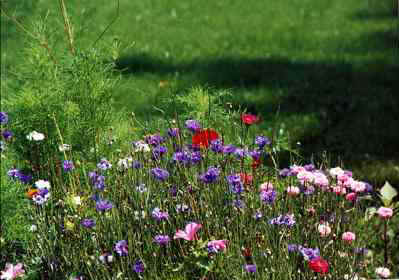 Bachelor buttons, poppies, cosmos greenery